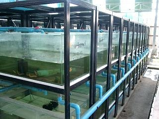 Jeda Aquatics Quarantine Facility with tanks filled with fishes ready for shipment